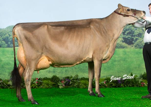 Bluegrass Bobs Jane Russell (UK Dairy Expo - 2nd lactation)